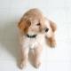 Retreiver Puppy